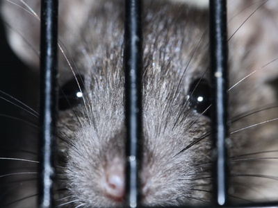 the controversy surrounding cosmetic testing on animals Debate about whether or not tests on animals should be banned should animal testing be banned 72% say yes 28 should the us require animal testing for cosmetics and beauty products animal testing.