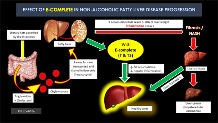 114312 on liver and metabolism