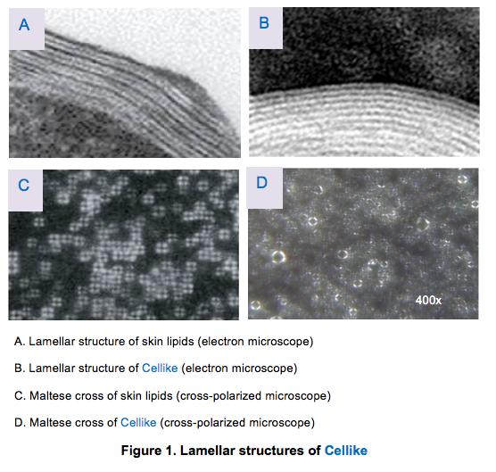 Cellike Skin Lipid Mimicker for Natural Emulsifier